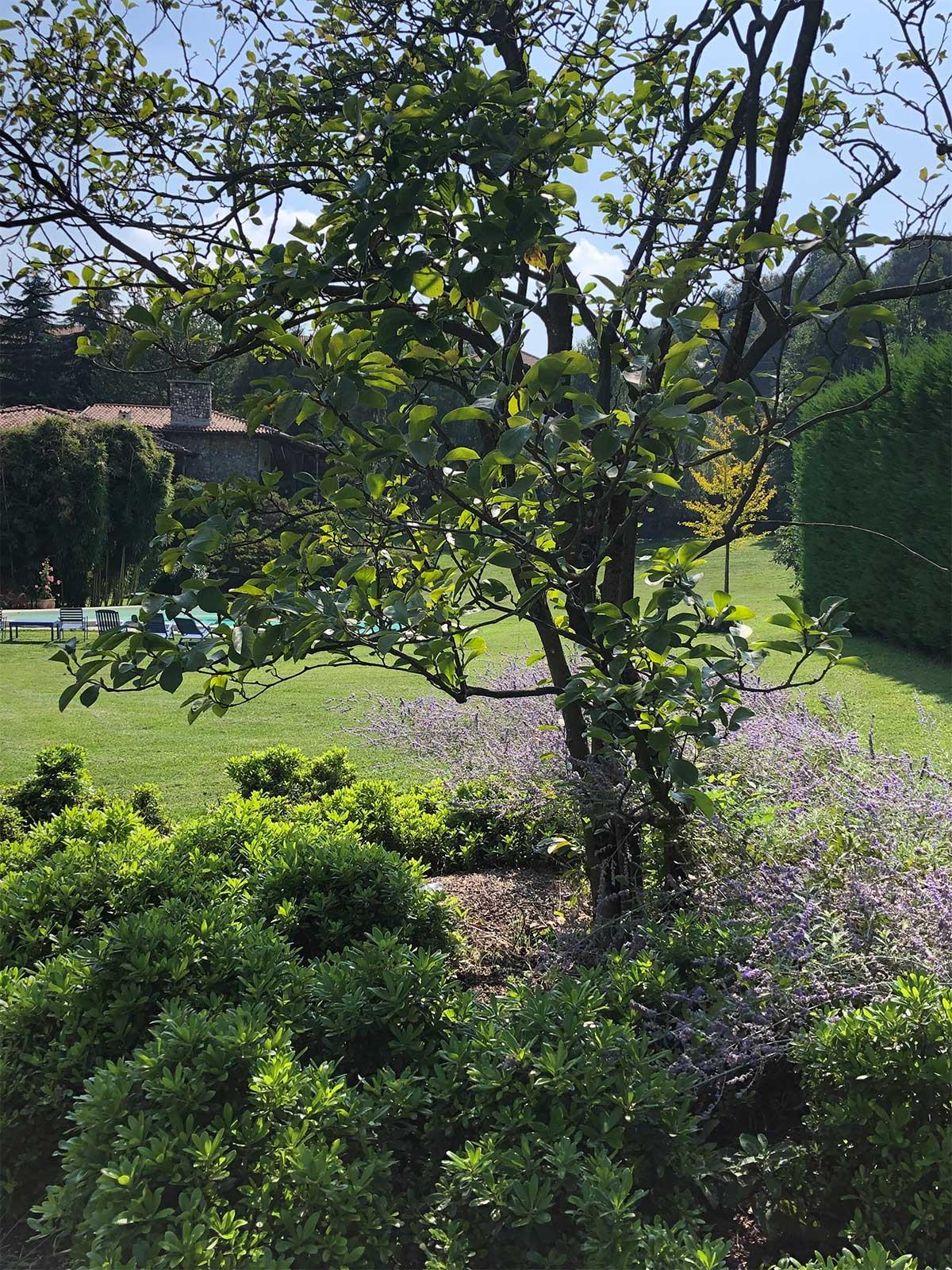 giardino OB - Besozzo - architetto Giuliana Gatti